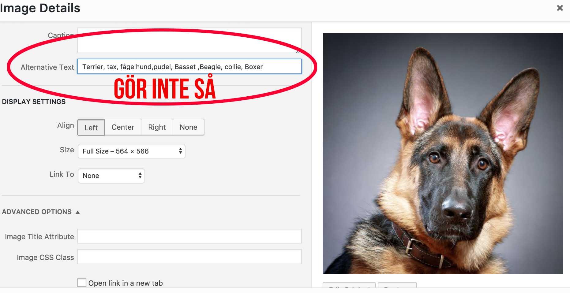 Alttext exempel-Optimera dina bilder för Google