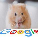 Optimera dina bilder för Google sök