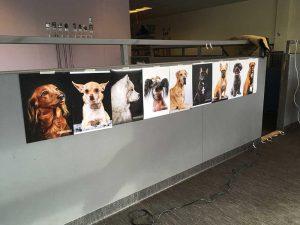Hundfotografering i Hundens hörna, Råsunda