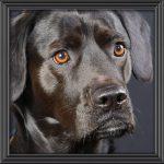 En kampanj i sociala medier om hundfotografering