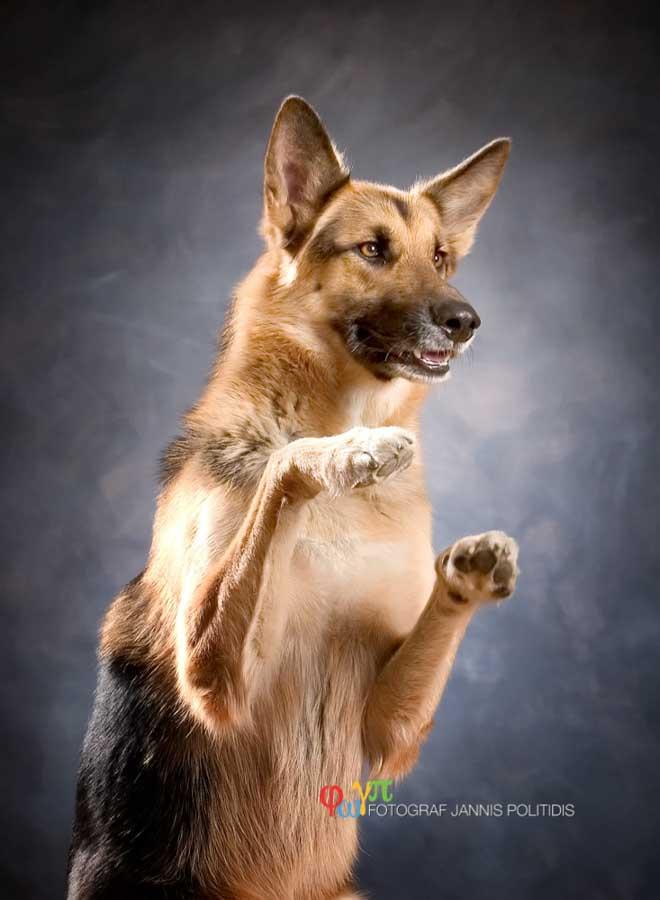 Hundfotografering i studion